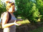 Camins de fruita dolça - la Granja d'Escarp